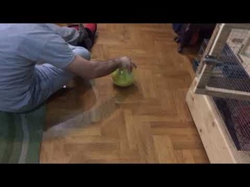Playing with my pet