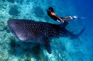 Photography and travel: Scuba Diving Cruise In Maldives